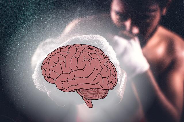 Boxer doing brain training
