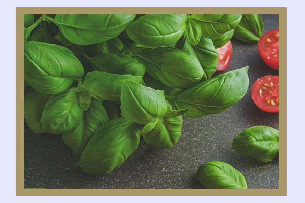 Fresh basil - low-calorie foods for easy weight loss