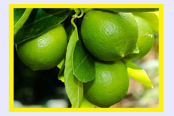 High-volume and filling low-calorie foods: limes