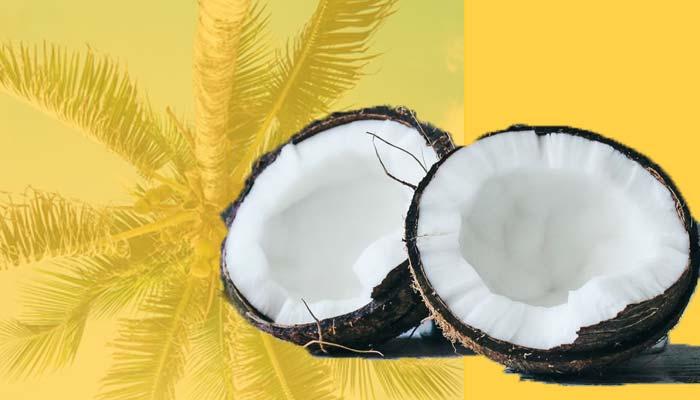 Coconut meat, a healthy high-calorie fruit.