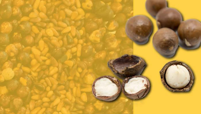 Macadamia nuts, a high-calorie snack that is rich in healthy fats.